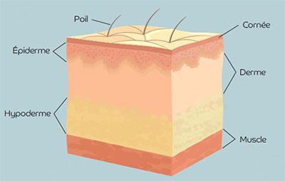 peau couche