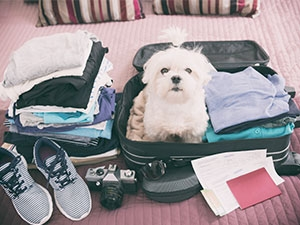 La législation pour le voyage des animaux de compagnie en dehors de la France