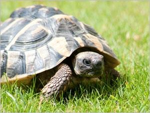 Soigner l'anorexie chez la tortue