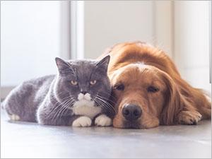 Ralentir et soulager l'arthrose chez le chat et le chien