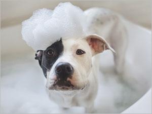 Comment donner le bain à son chien ?