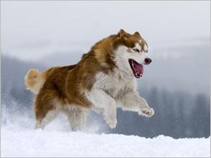 Conseils pour les séjours à la montagne avec votre chien