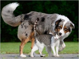 Attention aux empoisonnements chez le chat et le chien