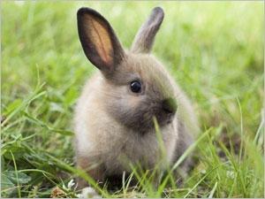 Les conditions de vie idéales du lapin nain