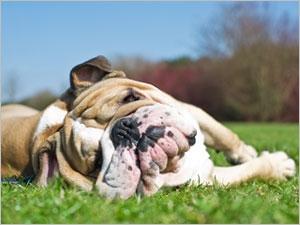 Prévenir les coups de chaleur chez le chien
