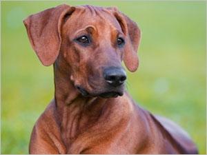 Les symptômes et les traitements du chien épileptique