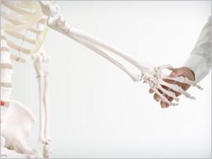 Les os et la masse osseuse