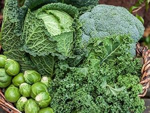 Légumes d'hiver : une source de bienfaits