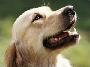 Prévenir et traiter le tartre chez le chien