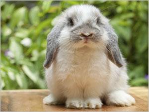Comment déceler et guérir la malocclusion dentaire chez le lapin