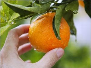 L'apport nutritionnel de la mandarine