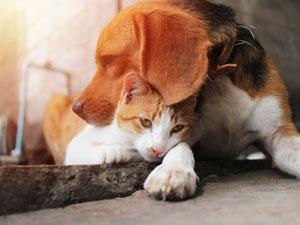 Les documents d'accompagnement du chat et du chien