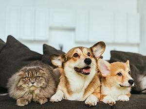 Détecter les parasites chez le chien et le chat