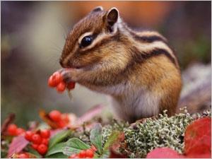 Les caractéristiques des petits animaux de compagnie