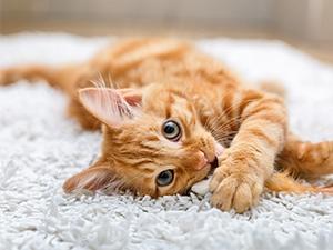 Les traitements et médicaments à avoir pour votre chat