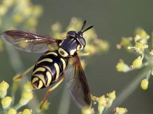 Traiter les piqûres d'insectes par l'homéopathie