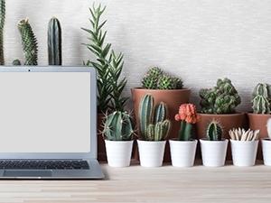 Les bienfaits des plantes verte au travail