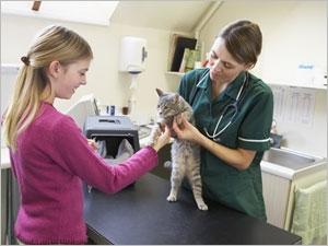 La première visite vétérinaire de votre animal de compagnie