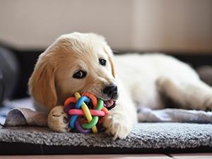 Soigner et entretenir les dents du chien