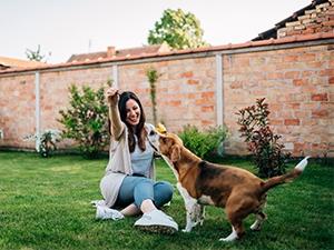 Les conseils de sécurité pour votre chien au jardin