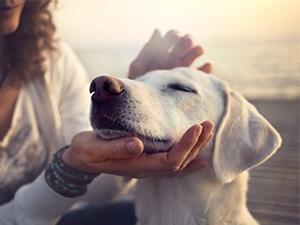 La pharmacie de votre chien
