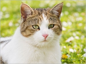 Comment reconnaître la teigne chez le chat ?