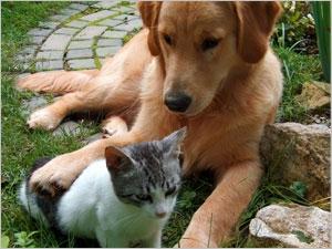 Traiter le chat et le chien contre les tiques