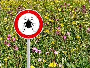 Prévenir et traiter la maladie de Lyme