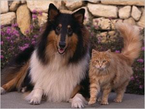 Les tumeurs de la mamelle chez le chien et le chat ...