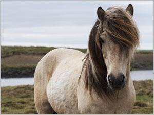 Vermifuger le cheval