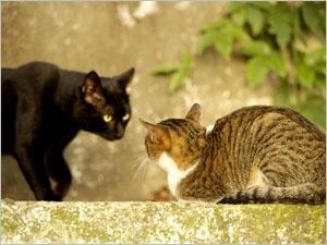 Le cycle reproducteur de la chatte