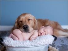 Comment préparer votre chien à l'arrivée du bébé ?