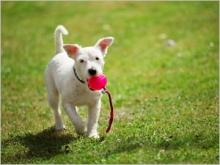 Diarrhée, constipation : comment soulager votre chien ?