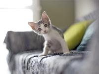 Les vaccins et soins chez le chaton