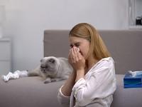 Asthme allergique: quel traitement ?