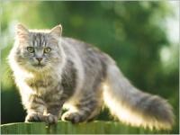 Les bons gestes pour votre chat en cas de canicule
