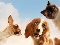 Les animaux de compagnie en vacances : conseils