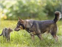 Les moyens de prévention contre les parasites chez le chien et le chat