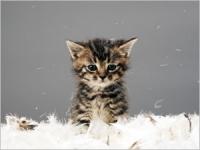 Les symptômes et les traitements du coryza chez le chat