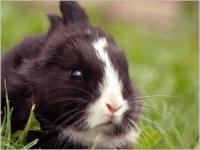 Les problèmes de dents chez le lapin