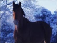 Les problèmes respiratoires chez le cheval