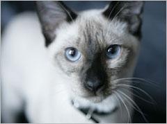 Accueil Santé chat