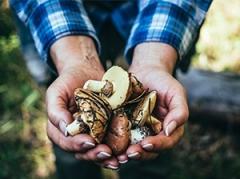 Rubrique champignons