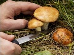 Rubrique récolte champignons