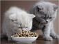 Comment bien nourrir votre chat ?