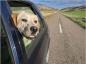 Voyager en légalité avec son animal de compagnie