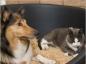 Tarir la lactation chez la chatte et la chienne