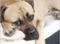 Surveillez les pattes de votre chien pour dépister l'arthrose