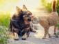 Les vacances avec vos animaux de compagnie