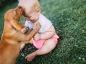Les chiens renforceraient le système immunitaire des bébés